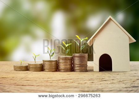 Real Estate Investment, Money Savings For Buy New Home, Financial Wealth Management Concept. A Plant