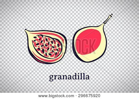 Hand Drawn Stylized Granadilla. Vector Fruit Isolated On Transparent Background. Graphic Illustratio