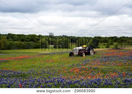 Vintage Tractor In A Meadow Near Ennis, Texas
