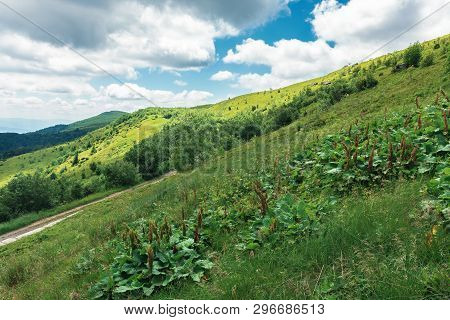 Beautiful Mountain Landscape At Summer Forenoon. Hills With Grassy Meadows Among The Forest. Dirt Ro