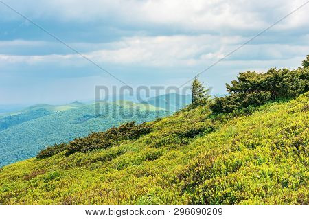 Tree On The Grassy Slope In Mountains. Grassy Slope On The Foreground And Ridge In The Distance. Clo