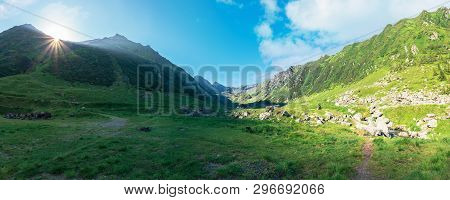 Gorgeous Valley Of Fagaras Mountains In Summertime. Amazing Landscape Of Romania At Sunrise. Locatio