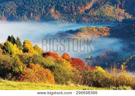 Beautiful Autumn Morning In Mountains. Trees On The Edge Of A Hill In Fall Colors, Green Grass On Th