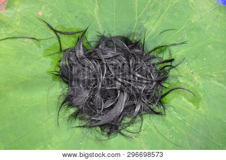 Cutting Hair On Lotus Leaf. The Ordination Ceremony Of The Buddhist Monks. Priest ,shaving The Hair,