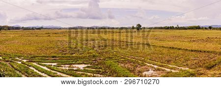 Panorama View Of Empty Rice Field In Summer At Rural Of The South Of Thailand