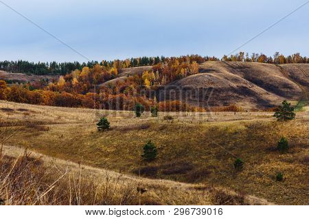 Autumnal Forest On The Hillside At Overcast Day