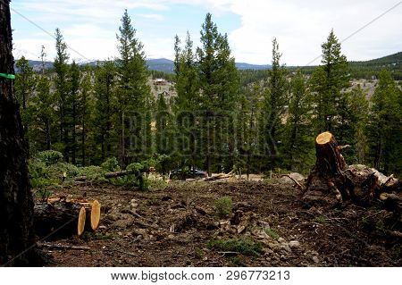 Forest Land Cleared Of Pine Trees, Showing Freshly Cut Trunks, For New Residential Construction In T