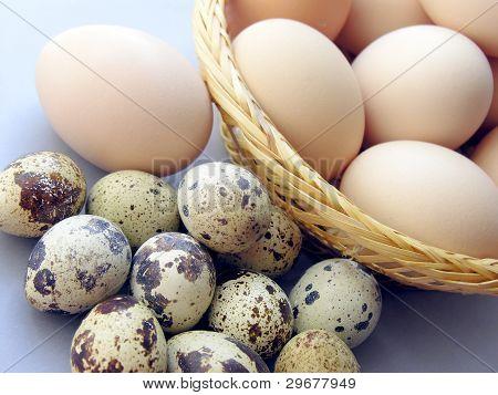 small quail and big hen eggs