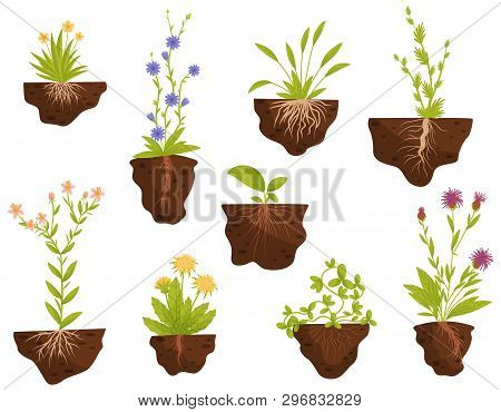 Set Of Flowering Plants With Roots In The Ground. Vector Illustration.