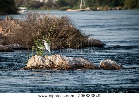 Image Of Heron Bird Standing Calmly On The Banks Of The Nile River At Aswan, Egypt