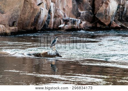 Image Of Little Egret Bird Standing Calmly On The Banks Of The Nile River At Aswan, Egypt