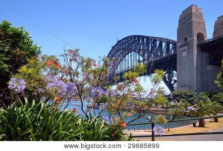 Sydney Harbor Bridge And Foliage