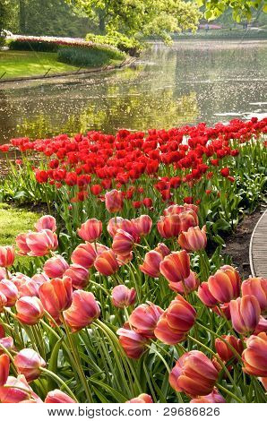 Tulip gardens, Keukenhof, NL