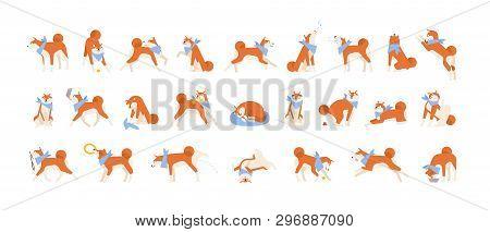 Collection Of Akita Inu Performing Daily Activities. Set Of Cute Japanese Dog Sleeping, Playing, Bar