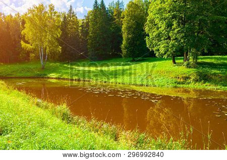 Summer forest beautiful landscape. Green summer forest trees near the river in sunny summer weather, colorful summer forest nature. Summer forest landscape