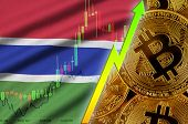 Gambia flag and cryptocurrency growing trend with many golden bitcoins poster