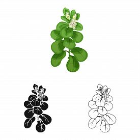 Isolated Object Of Leaves And Leaf Logo. Set Of Leaves And Botanical Stock Vector Illustration.