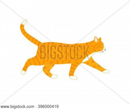 Walking Ginger Cat Isolated On White Backround. Cute Cartoon Cat Profile. Vector Illustration.