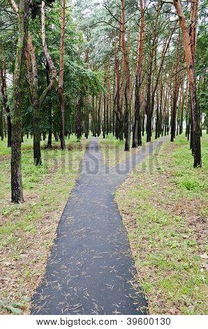 Asphalt Walkway In Park