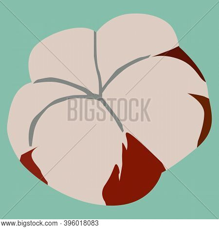 The Bud Of A Cotton Plant, Cotton, Is A Source Of Plant Fibers For The Textile Industry, Vector Draw