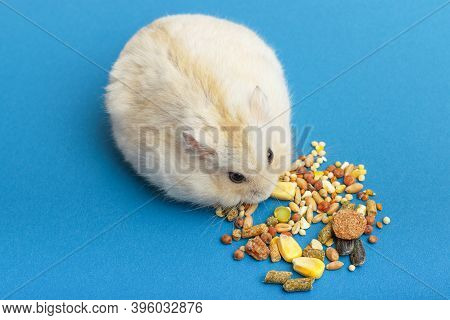 Dwarf Fluffy Hamster Eats Grain On Blue Background, Top View.