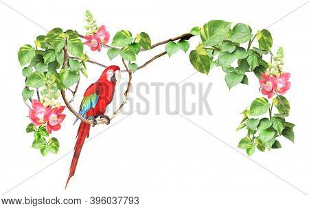 Ara parrot sits on a liane among tropical leaves and flowers. Frame with liana branches and Scarlet Macaw. Border with plants of jungle and Ara macao. Copy space for text. Isolated on white background