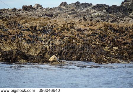 A Paradise For Seals.myross Island Is Located In The South Of Ireland In The Celtic Sea.muir Cheilte