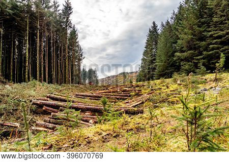Deforestation Giong On In County Donegal - Ireland