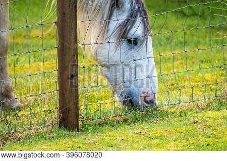 Horse Grazing At Wire Fence In Autumn