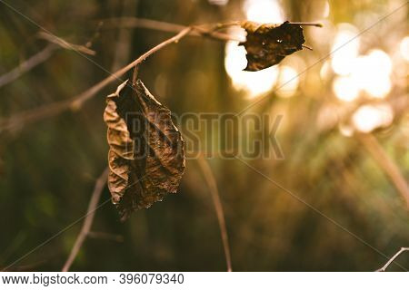 Autumn Season Themed Photos In Dark Moody Fores. Nature Background