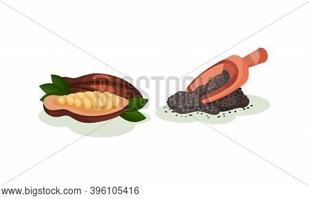 Cocoa Bean And Powdered Carob In Wooden Scoop As Superfood Vector Set