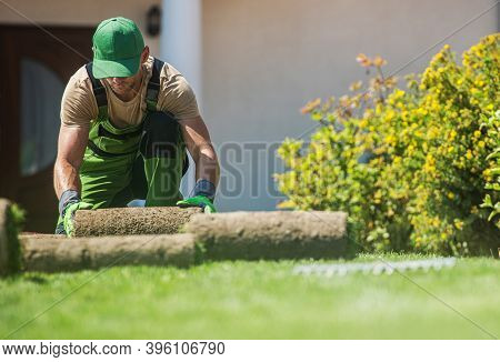 Natural Grass Turfs Installation Job Performed By Caucasian Professional Landscaper Gardener In His