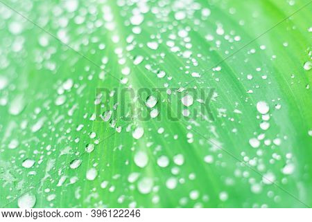 Drop Water On Green Leaf Blurred Background, Leaf From Natural Tropical Forest