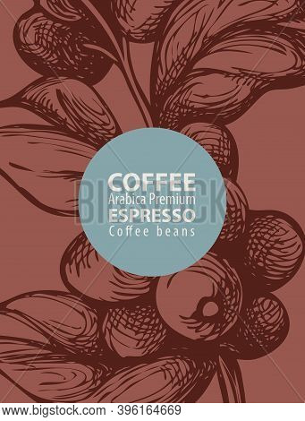 Coffee Label In Retro Style. Vector Label For Coffee Beans With Hand-drawn Coffee Twig, Coffee Berri