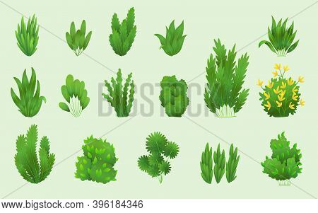 Grass Or Bushes. Green Realistic Spring Grasss. Fresh Plants, Garden Botanical Greens, Herbs And Lea