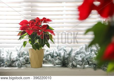 Beautiful Potted Poinsettia (traditional Christmas Flower) And Festive Decor On Window Sill At Home.