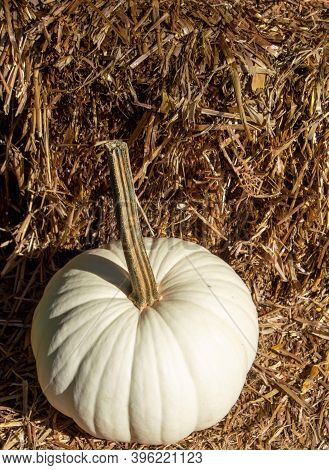 Vertical White Pumpkin On Hay Bale Straw