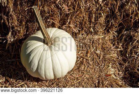 Single White Pumpkin On Hay Bale Straw
