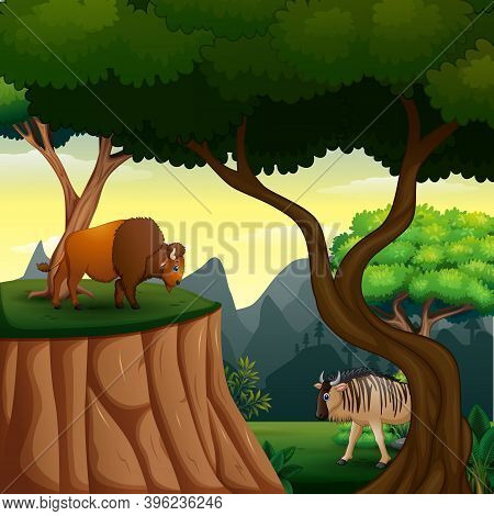 Cartoon Of Buffalo And Wildebeest At The Jungle Illustration