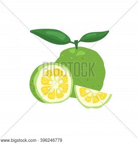 Green Yuzu Japanese Citron Fruit Vector Illustration Isolated On White Background. Full Citrus Yuzu