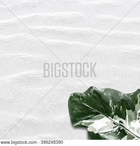 Variegated leaf on white texture background
