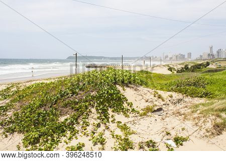 Sand Dunes Covered With Vegetation And Pier And Durban In Background