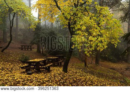 Autumn Landscape With Trees And Autumn Leaves On The Ground After Rain At Troodos Mountains Cyprus