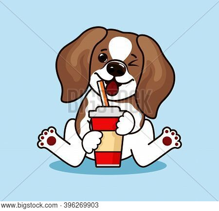 Funny Beagle Dog. Cute Beagle Dog Standing And Looking Up. Lovely Cool Puppy.