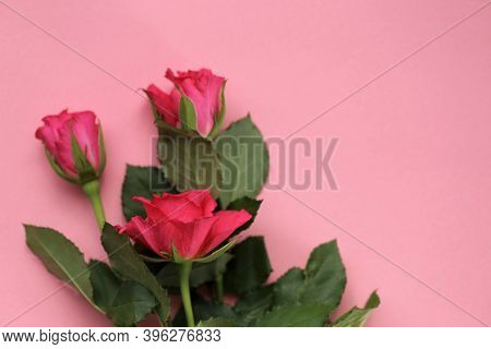 Pink Roses On A Pink Background.floral Delicate Beautiful Background With Roses. Blank Floral Card.c