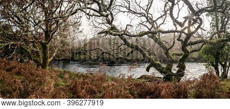 The Landscape Next To The Owenea River By Ardara - Donegal, Ireland