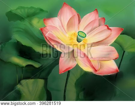Pink Flower Of Lotus And Green Leaves. Hand Drawn Illustration.