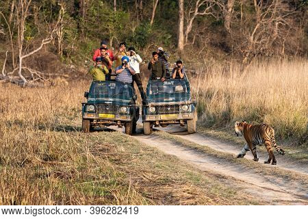 Jim Corbett National Park, Ramnagar, Uttarakhand / India - March 2, 2020 - Wild Female Bengal Tiger