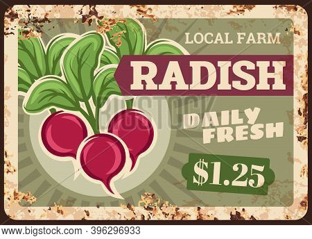 Radish Rusty Metal Plate, Vegetables Food And Farm Market Price Menu, Vector Retro Poster. Radish Ve