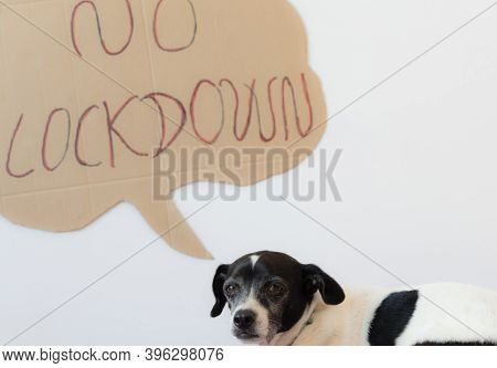 Dog With Cute Sentimental Eyes On A Bed. Dog Activist No Lockdown. Coronavirus And Pet Concept.